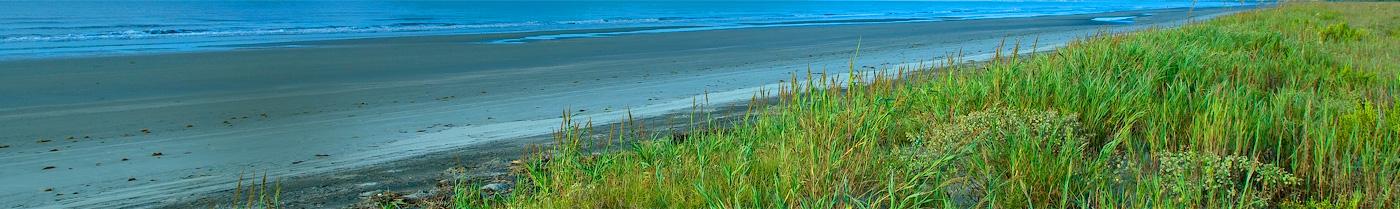 Grass by beach